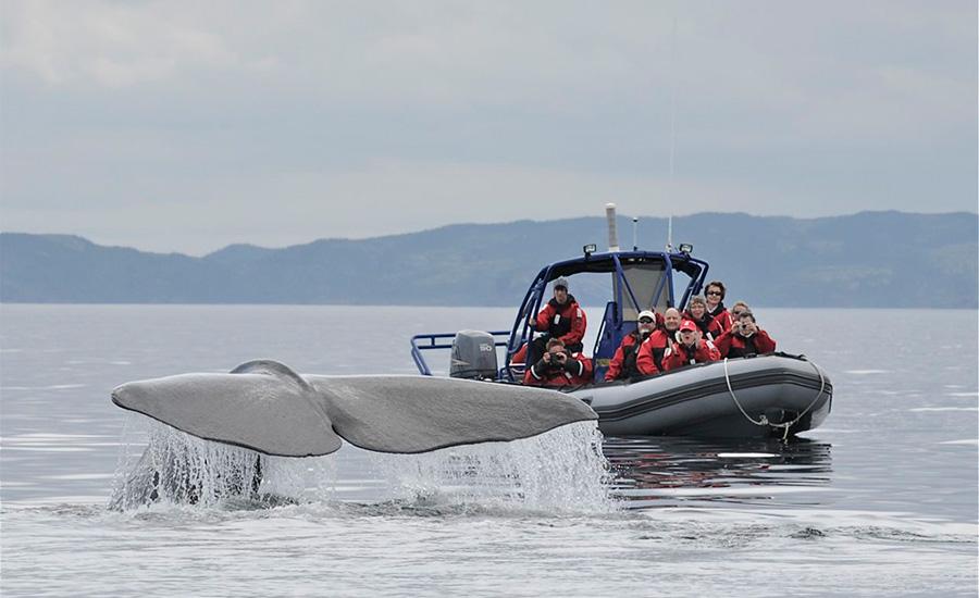 Sea of Whales Adventures